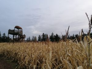 Cultural Connection Trip To The Corn Maze